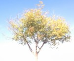 LightColorTree2 (2)