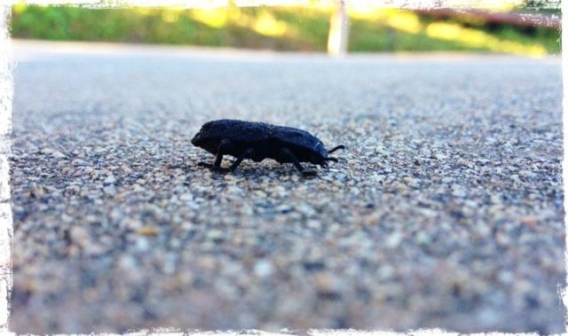 Bug Walk medium