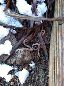 saving worms 1