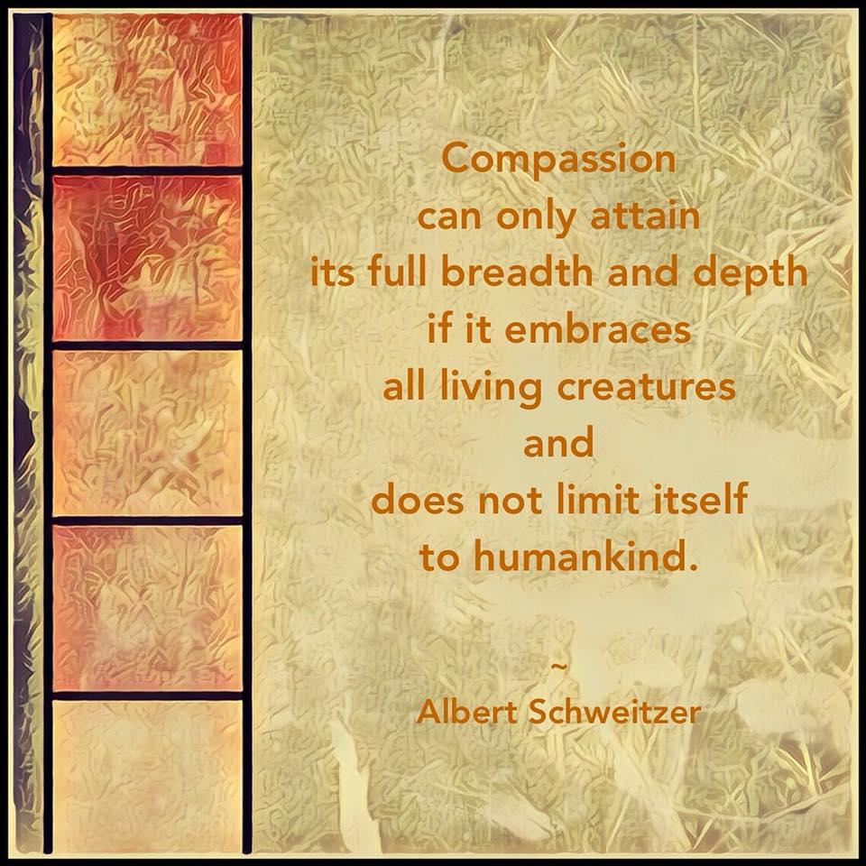 Compassion Meme