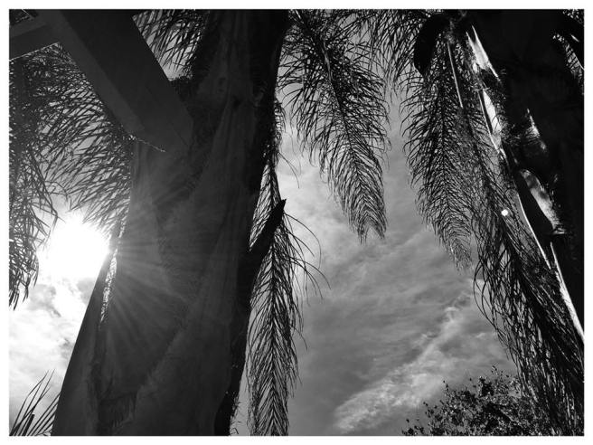 sunshine palms